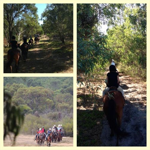 Become a Qualified Trail Ride Guide in Australia